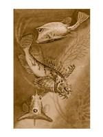Cow trunk fish, orange sea raven, common trunk fish Fine-Art Print