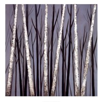 Birch Shadows Fine-Art Print
