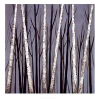 Birch Shadows Fine-Art Print