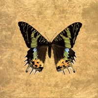 Butterfly on Gold Fine-Art Print