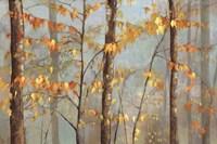 Delicate Branches Fine-Art Print