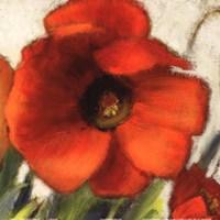 Poppy Splendor Square II (Close up) Fine-Art Print