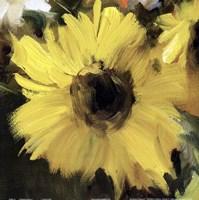 Sunflower Square I Fine-Art Print