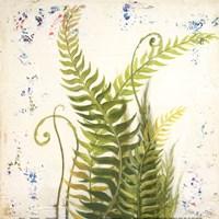 Nice Ferns I Fine-Art Print