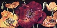 Dazzlin poppies I Fine-Art Print