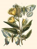 Butterfly Oasis II Fine-Art Print