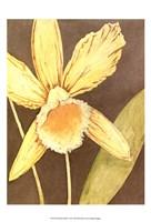 Orchid & Earth I Fine-Art Print