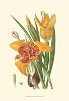 Striking Lilies I Fine-Art Print