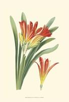 Striking Lilies III Fine-Art Print
