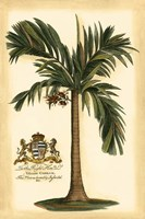 British Colonial Palm I Fine-Art Print