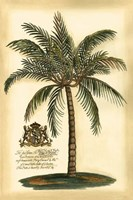 British Colonial Palm III Fine-Art Print