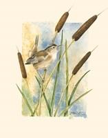 Marsh Wren and Cattails Fine-Art Print