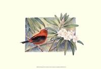 Scarlet Tanager Fine-Art Print