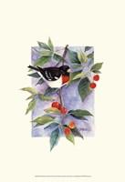 Red-Breasted Grosbeak Fine-Art Print