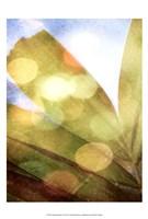 Tropical Daydream II Fine-Art Print
