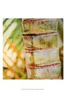 Tropical Texture II Fine-Art Print