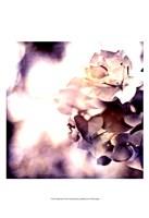 Purple Dusk II Fine-Art Print