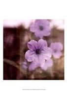 Purple Tranquility II Fine-Art Print