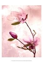 Tulip Blush I Fine-Art Print