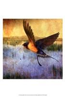 Barnswallow Fine-Art Print