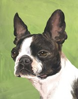 Dog Portrait-Boston Fine-Art Print
