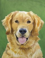 Dog Portrait-Golden Fine-Art Print