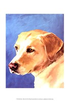Dog Portrait-Yellow Lab Fine-Art Print