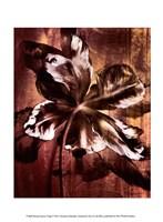 Bronze Parrot Tulip I Fine-Art Print