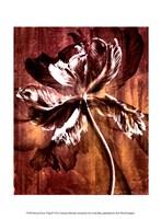 Bronze Parrot Tulip II Fine-Art Print