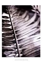 Silvery Frond I Fine-Art Print