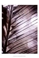 Silvery Frond II Fine-Art Print