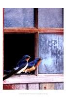 Barn Swallows Window Fine-Art Print