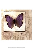 Butterfly Notes I Fine-Art Print
