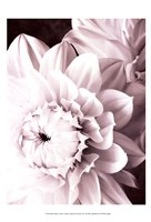 B&W Dahlias I Fine-Art Print