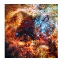 Star Cluster Fine-Art Print