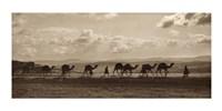 Egyptian Camel Transport Fine-Art Print