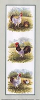 Roosters-2 Chickens Fine-Art Print