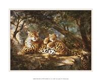 Leopard with Cub Fine-Art Print