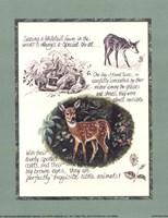 Deer Study Fine-Art Print
