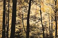 Golden Wood Fine-Art Print