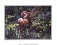 Deer in Fall Forest Fine-Art Print