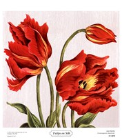 Tulips on Silk Fine-Art Print