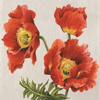 Poppies on Silk Fine-Art Print