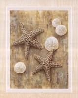 Starfish Fine-Art Print