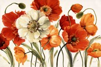 Poppies Melody Fine-Art Print