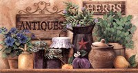 Antiques And Herbs Fine-Art Print