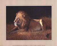 Majestic Lion Fine-Art Print