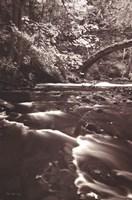 Whatcom Creek Fine-Art Print