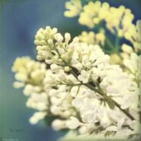 Natures Lilac Blossom Fine-Art Print