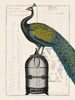 Peacock Birdcage II Fine-Art Print